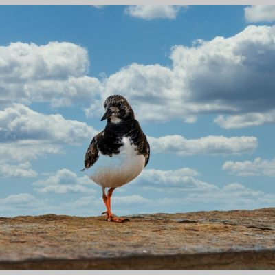 Fotografia profissional de pássaro com fundo de céu e nuvens