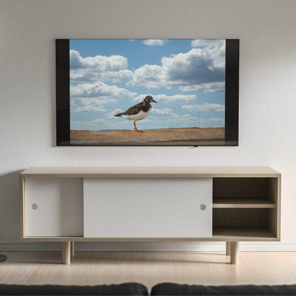 Fotografia profissional de pássaro em tela colocada na parede.